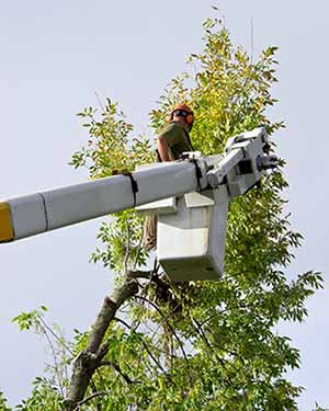 Express Tree Service - Trimming on Crane