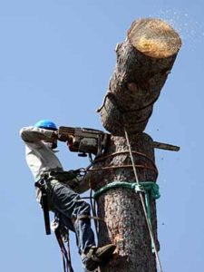 Tree Removal Cleveland